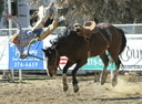 Wild West Daze Rodeo image